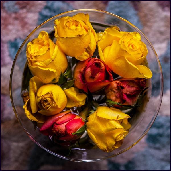 midsummer rosebuds... by estonian