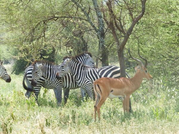 East Africa trip by Nigeltraveller