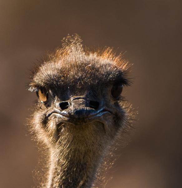 You talking to me!!! by Heyneker