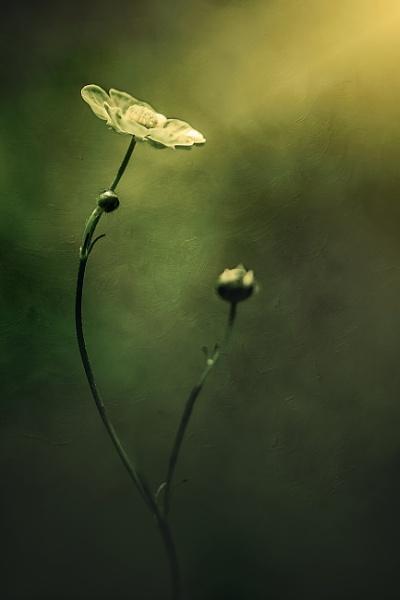 ...flower by KristinaZvinakeviciute