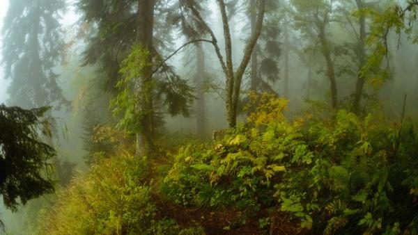 In the mist of the autumn forest by Aleksandr_Plekhanov