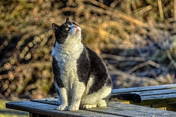 Curious cat by Leikon