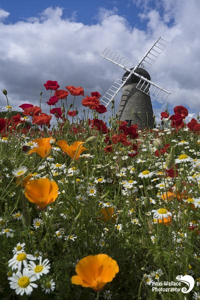 Whitburn windmill by Angi_Wallace