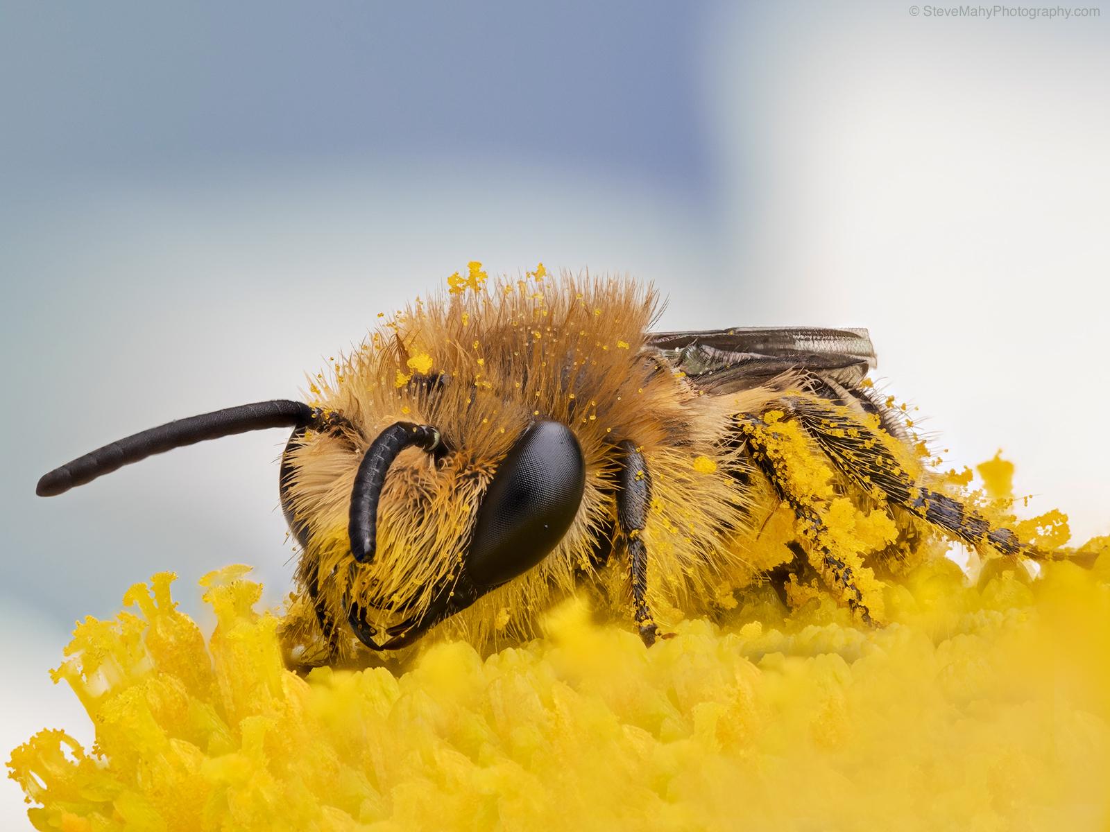 Funky Pollen