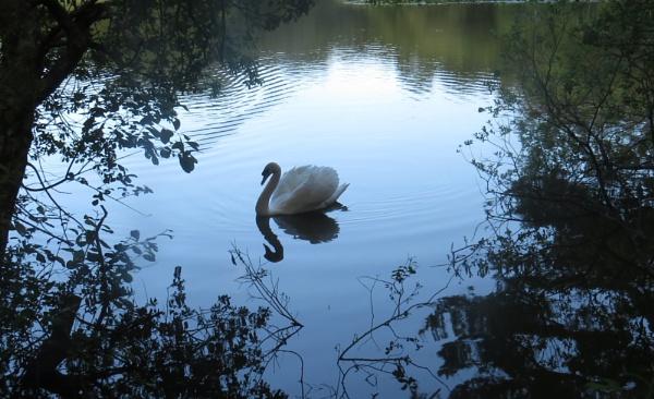 Swan Lake by SUE118