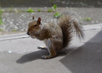Squirrel & His Nut.