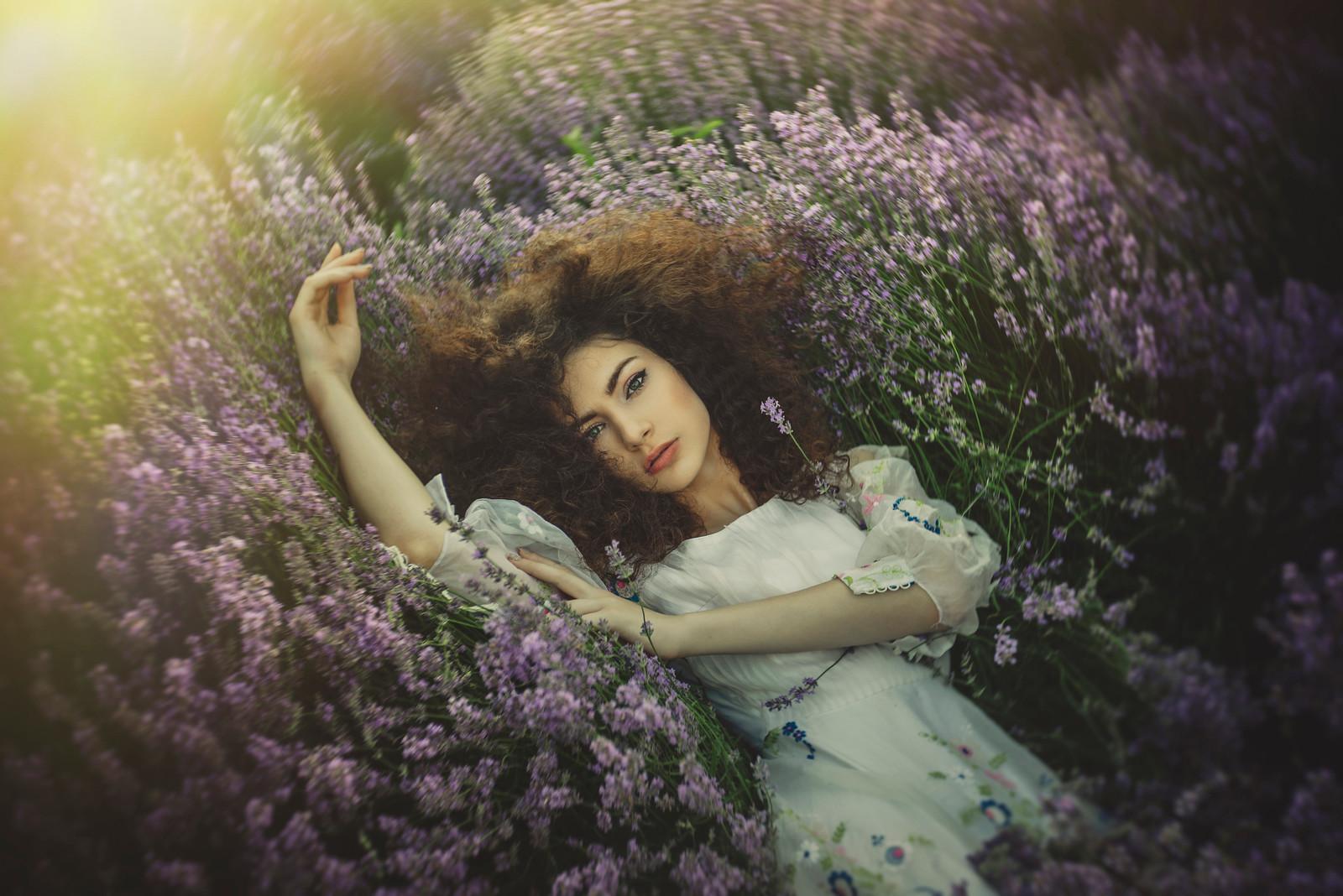 lavender in a dream