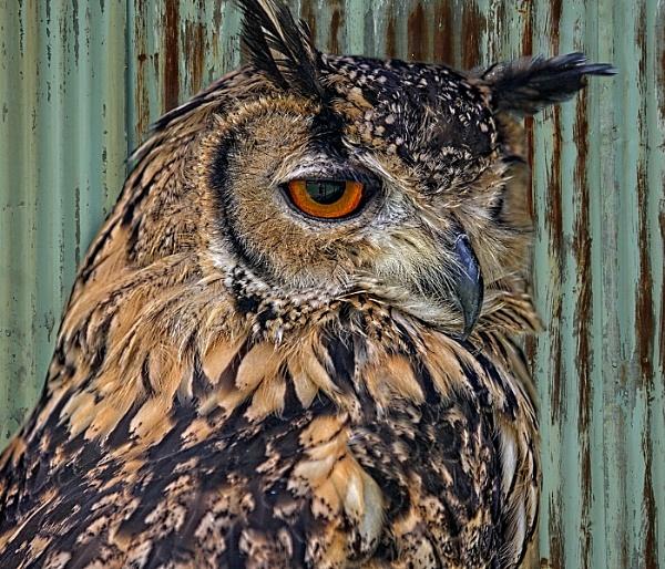 Majestic Owl by bobbyl
