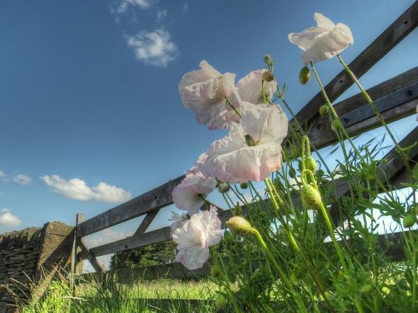 Wayside Whites by ianmoorcroft