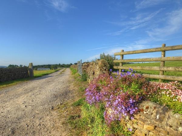 Down T\' Farm by ianmoorcroft