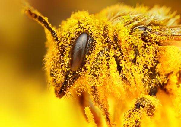 Pollen by biker11