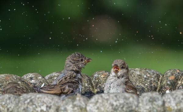 sharing a bath by alanb