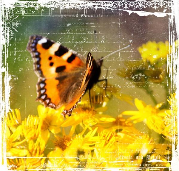 Butterfly by AlanJ
