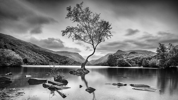 Lone Tree, Llyn Padarn by Les_Cornwell