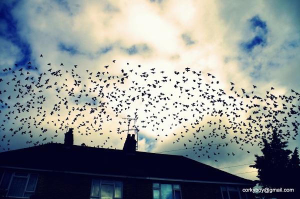 Birds at Motney Hill. by rustyshackleford