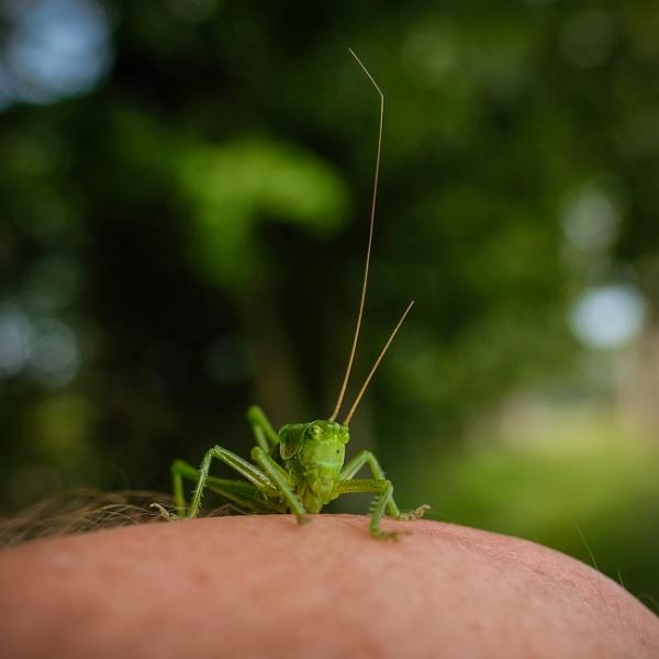 My little green friend - SET by Drummerdelight
