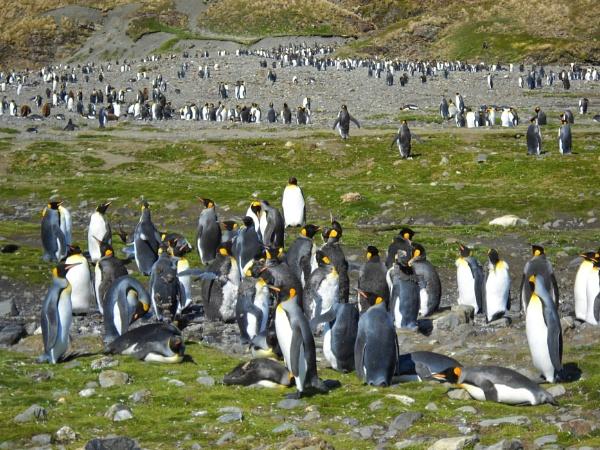 Pick up a Penguin by Nigeltraveller