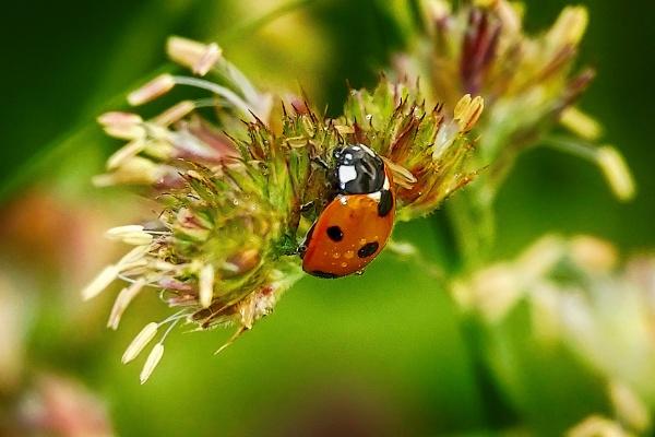 Ladybird by Backabit