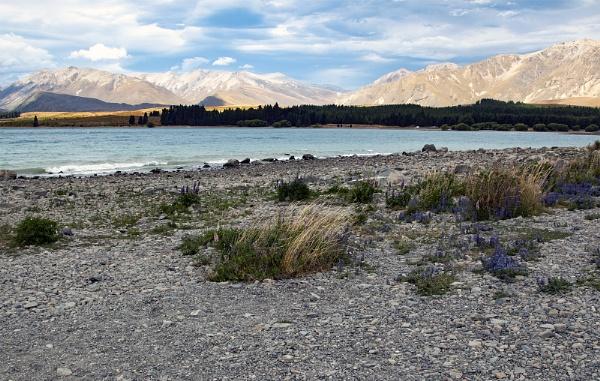 The Shores of Lake Pukaki by Janetdinah