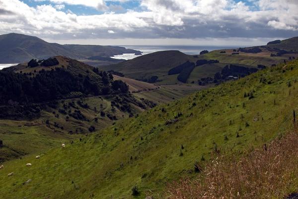 steep hillsides round Otago Bay Dunedin NZ by Janetdinah