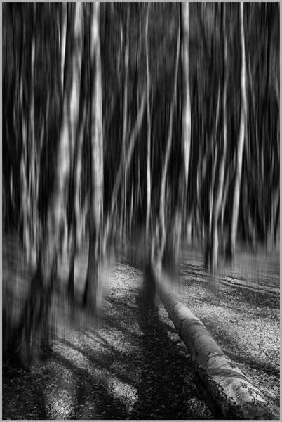 Woodland Shadows by AlfieK