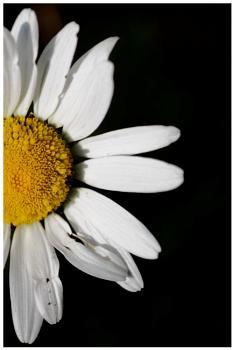 Summer Blossom 3