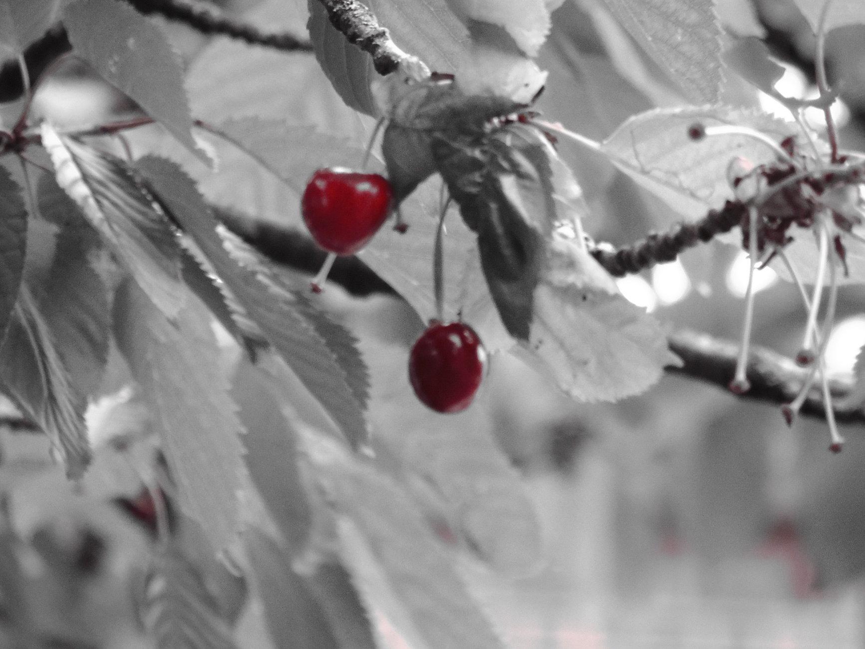 Cherry O'cherrio...