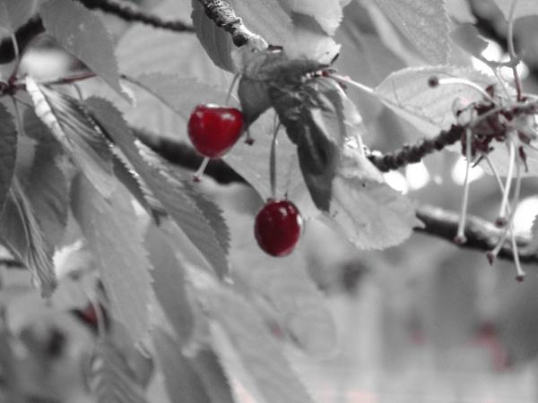 Cherry O\'cherrio... by wsh