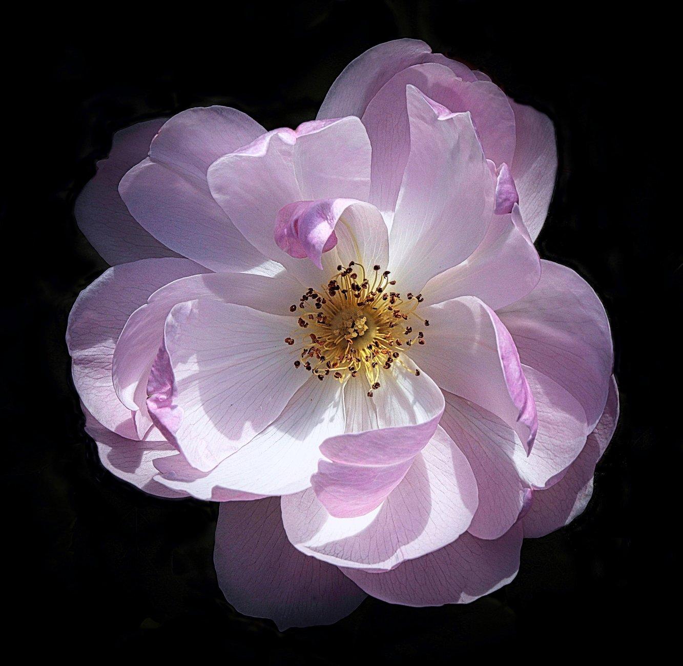 Flower of Summer
