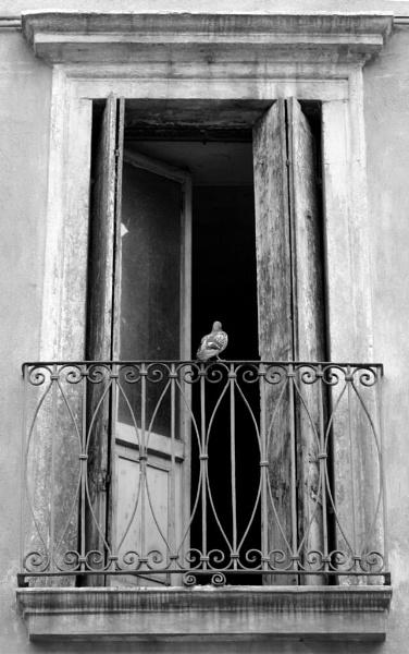 Venetian Pigeon by 50mm