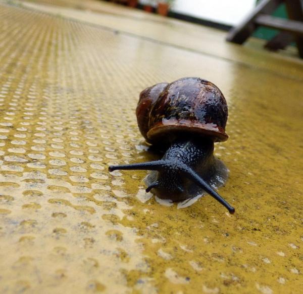 Snail by ELLISON58