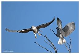Kite wars the retreat
