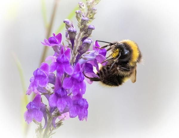 Bee Feeding by pauljt