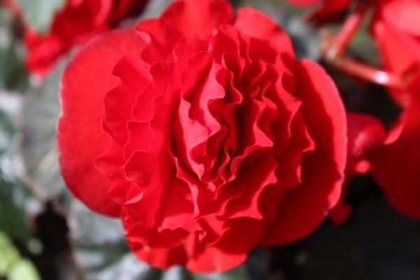 Garden Flower by carol01