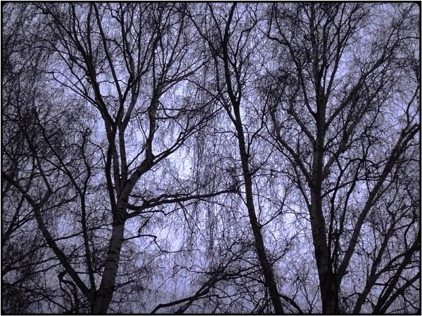 tree mystics by FabioKeiner