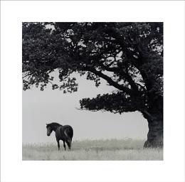 Horse Study VIII