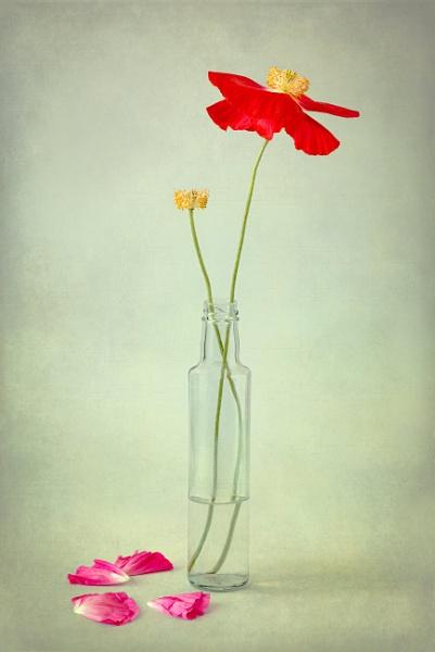 Missed it! by flowerpower59