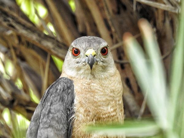 Hunting bird by gautamc