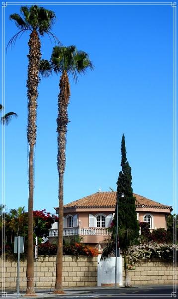 Tall palms by Stu74
