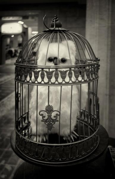 city bird #2 by leo_nid