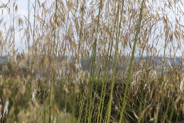 Grass by OverthehillPhil