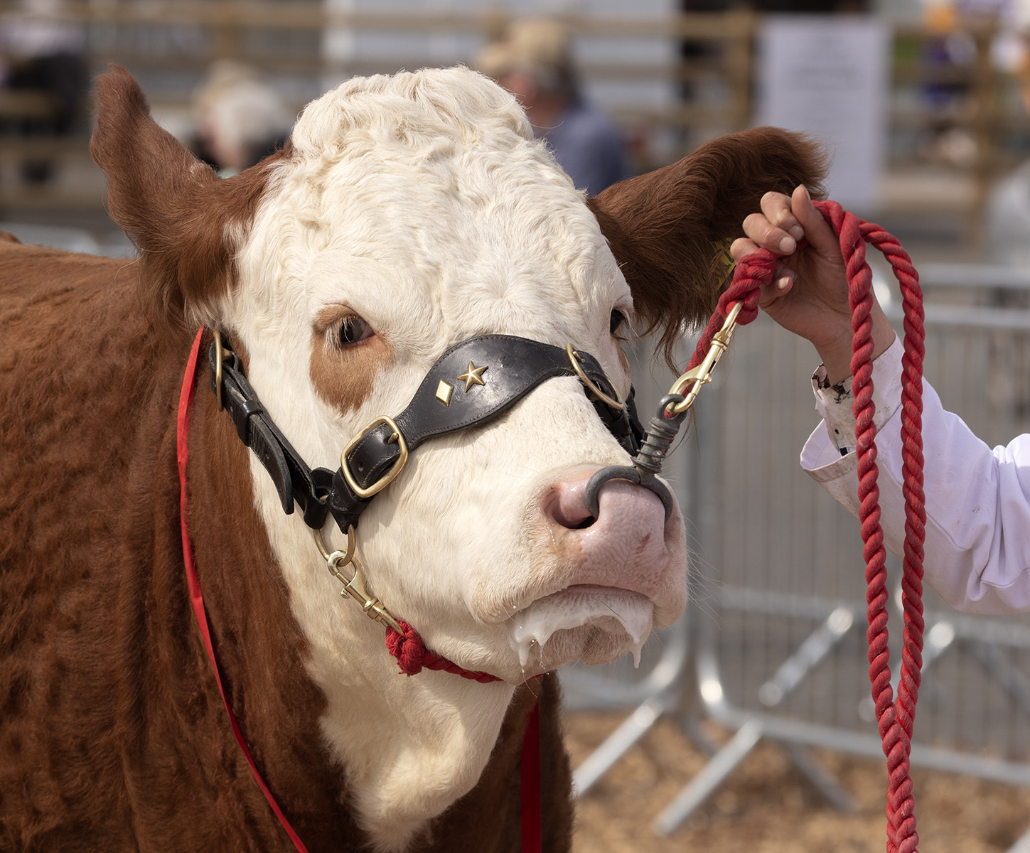 Am a looking good or what ? - Devon  County Show 2019