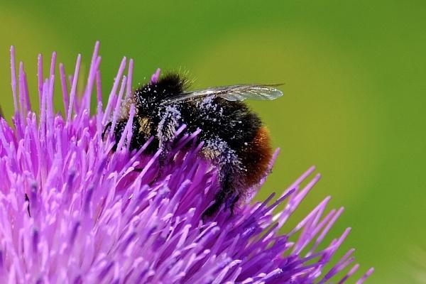 The Pollen Catcher. by Oldgeezer70