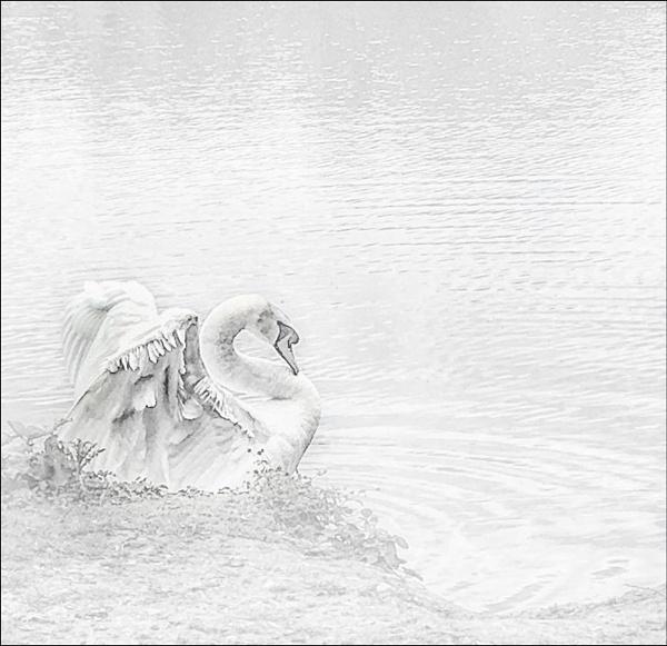 Swan lake by MAK2