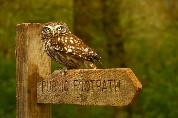 Little Owl by edward_payne_photography