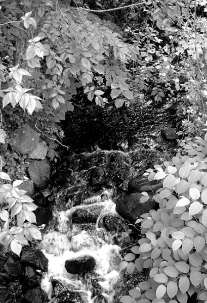 "~ \""Wandering Stream II\"" by LexEquine"