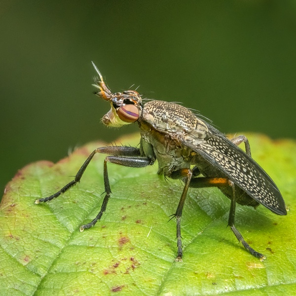 The Snail Killing Fly by barrywebb