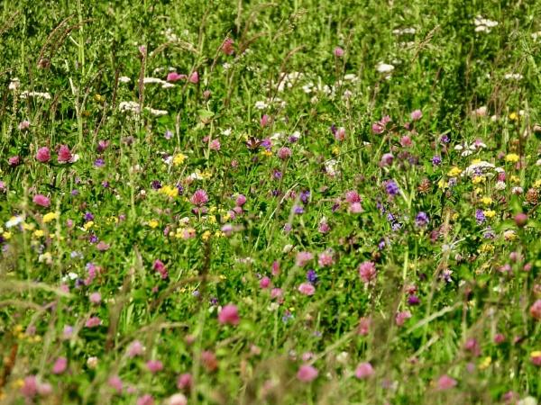 wild flowers by roge21