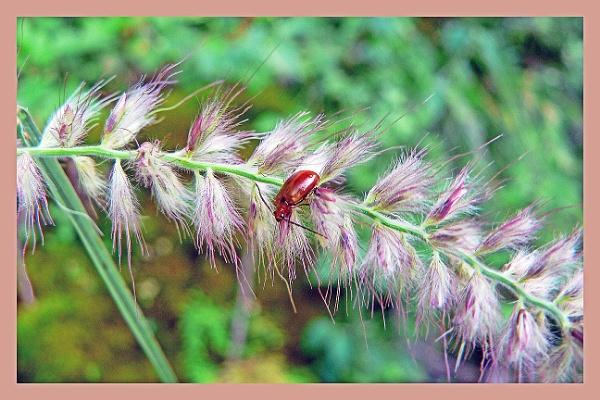 Flowery bed by prabhusinha