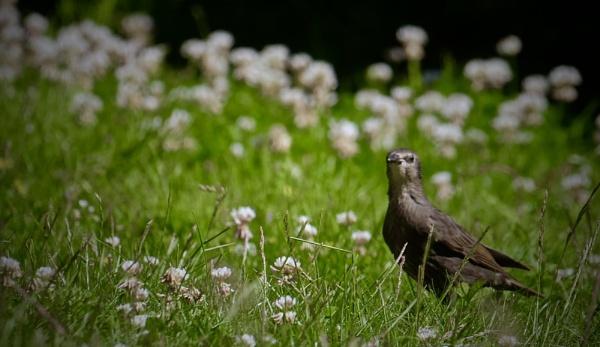 Shhh !!! Listen........!!! by sparrowhawk